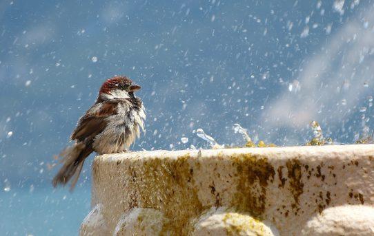 bird-1387924_1280